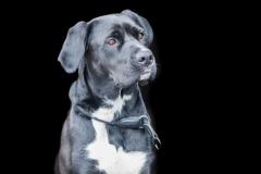 Hund vor schwarzem Hintergrund