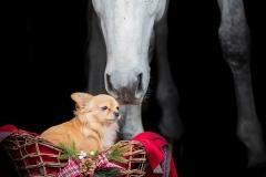 Pferdefotografie, Weihnachtsshooting